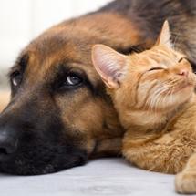 Kleine Huisdieren